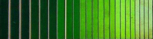 تنالیته سبز